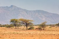 savanna in the Awash National Park, Ethiopia