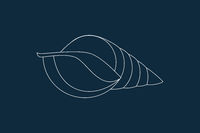 Seashell Icon Vector