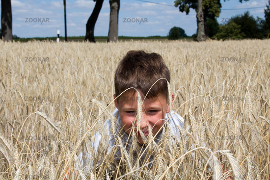 Little boy is playing in the cornfield
