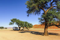 Motorhome stands in the shade under an acacia tree in the Namib Desert, Namibia, Africa.