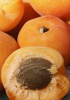 Ripe apricots close up