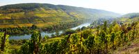 colored Moselle valley in autumn