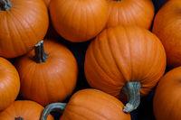 Many pumpkins background