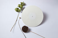 Dry branches and white vinyl audio record on a light background with copy space. Flat lay