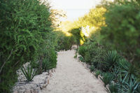 Sandy path leading to sun lit beach, green agave and bushes on both sides, shallow depth of field photo