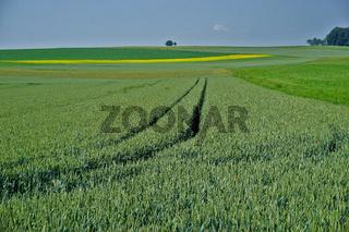 Landschaft auf der Schwäbischen Alb mit Getreidefelder