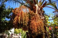 beautiful garden in Vicuña, Chile