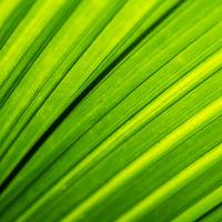 Backlit foliage texture