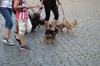 Pedestrians with their dogs
