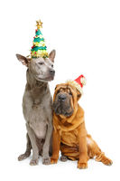 two dogs in christmas hats isolated on white