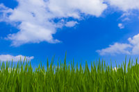 Grass and cloudy sky