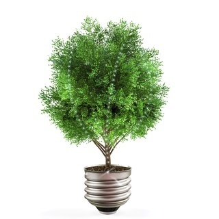 Green energy concept, tree with light bulb socket