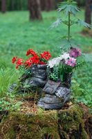 Touristic boot with flowers in the forest.