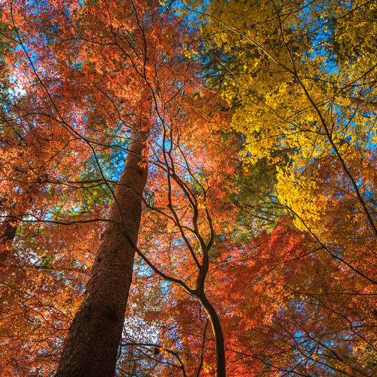 multi colour trees in the autumn forest