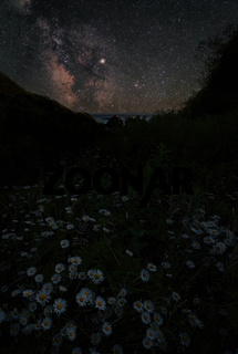 Daisies and the Milky Way in Trinidad, California
