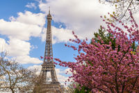 Paris France city skyline at Eiffel Tower with spring cherry blossom flower