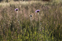 Meadow in the evening light