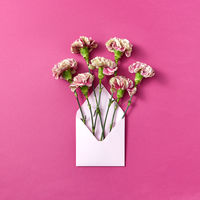 Congratulation card with carnation flowers in an envelope on a magenta background.
