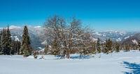 Winter snowy Carpathian mountains view, Ukraine
