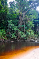 River in Jungle rainforest Taman Negara national park, Malaysia