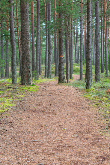 Hiking trail through the forest