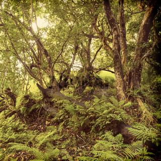 African Jungle Landscape