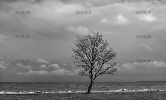 The tree on the seashore