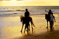 tourists riding horses on beach