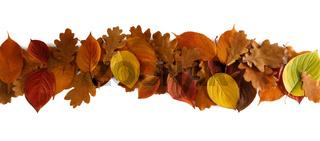 Autumn leaves stripe