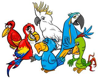 colorful parrots group cartoon illustration