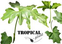 Green Tropical Photorealistic Leaves Set