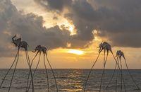 Elephant sculptures over the shoreline at Sunset Senato Beach Club