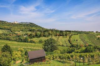 View over vineyard valley towards Kahlenberg and Leopldsberg