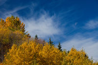 Trees with colorful autumn colors