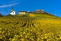 Winzerdorf Féchy-Dessus mit Kirche im Weinbaugebiet La Côte