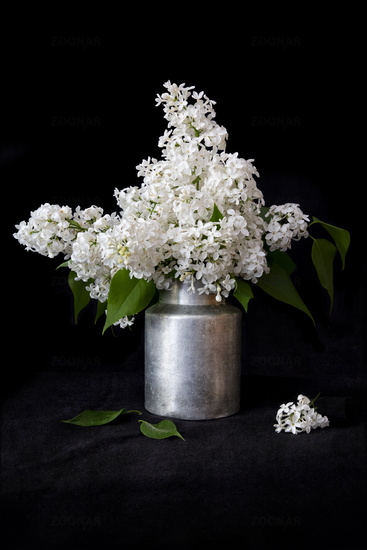 White lilac in an old milk can on a black background