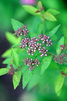 bush flower branch with buds