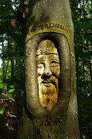 Wooden figure carved in beech trunk