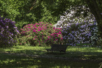 empty bench in rhododendron park