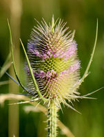 a close up of a wild card, thistle