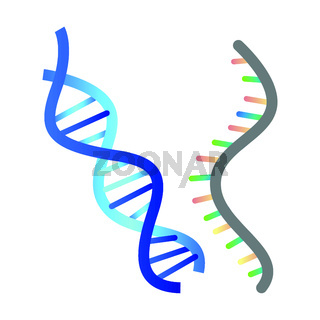 DNA and RNA vector illustration on white background