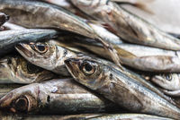 sardines, fish market, market hall, Funchal, Madeira, Portugal, Europe