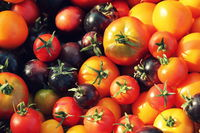 Heirloom variety tomatoes on rustic table. Colorful tomato - red,yellow , black, orange. Harvest vegetable cooking conception