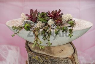 Geschenk selbstgemacht mit Sukkulenten in Betonschale - Dekoration Kakteengewaechs