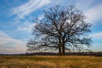 single tree mood of light