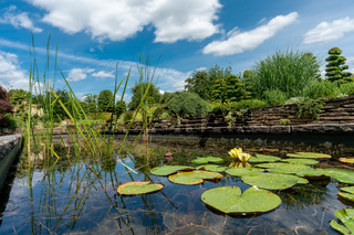 formal garden pond with water lilies and lily pads