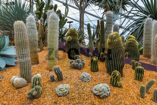 Cactus at Gardens by the Bay in Singapore