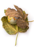 Little model globe placed between two Autumn leaves