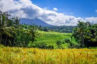 Jatiluwih paddy field rice terraces, Bali, Indonesia