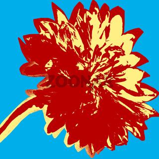Cornflower picture
